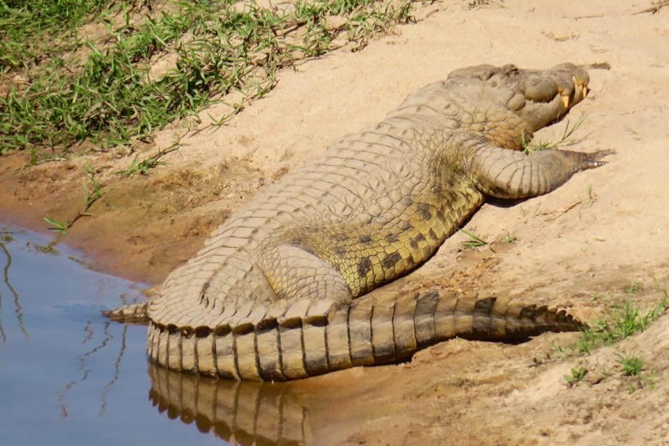 Dormire nel Kruger National Park - Rhino Post Safari Lodge