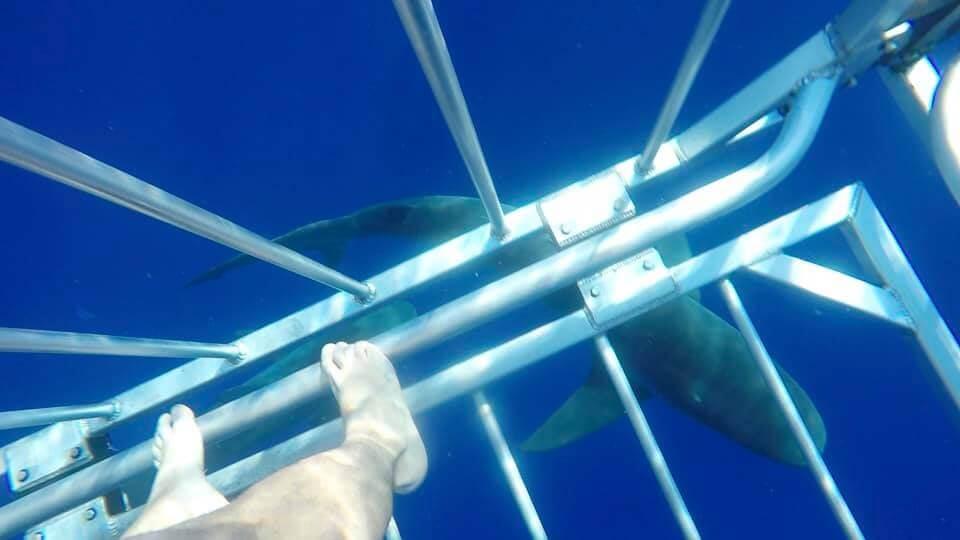 nuotare con gli squali - Oahu (Hawaii)
