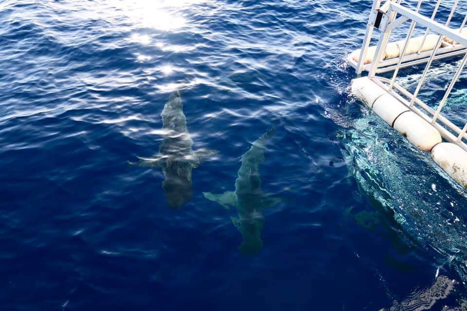 gabbia per gli squali - Hawaii