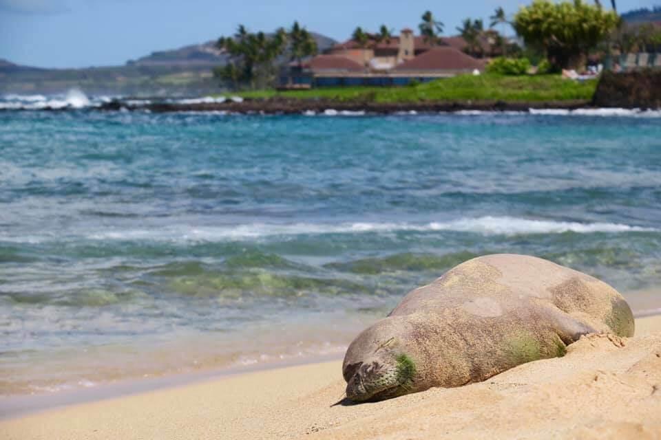 Poipu Beach alle Hawaii